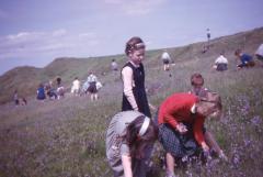 Children picking bluebells on Old Oswestry (from Mary Hignett archive)